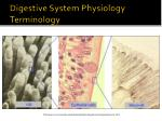 digestive system physiology terminology4