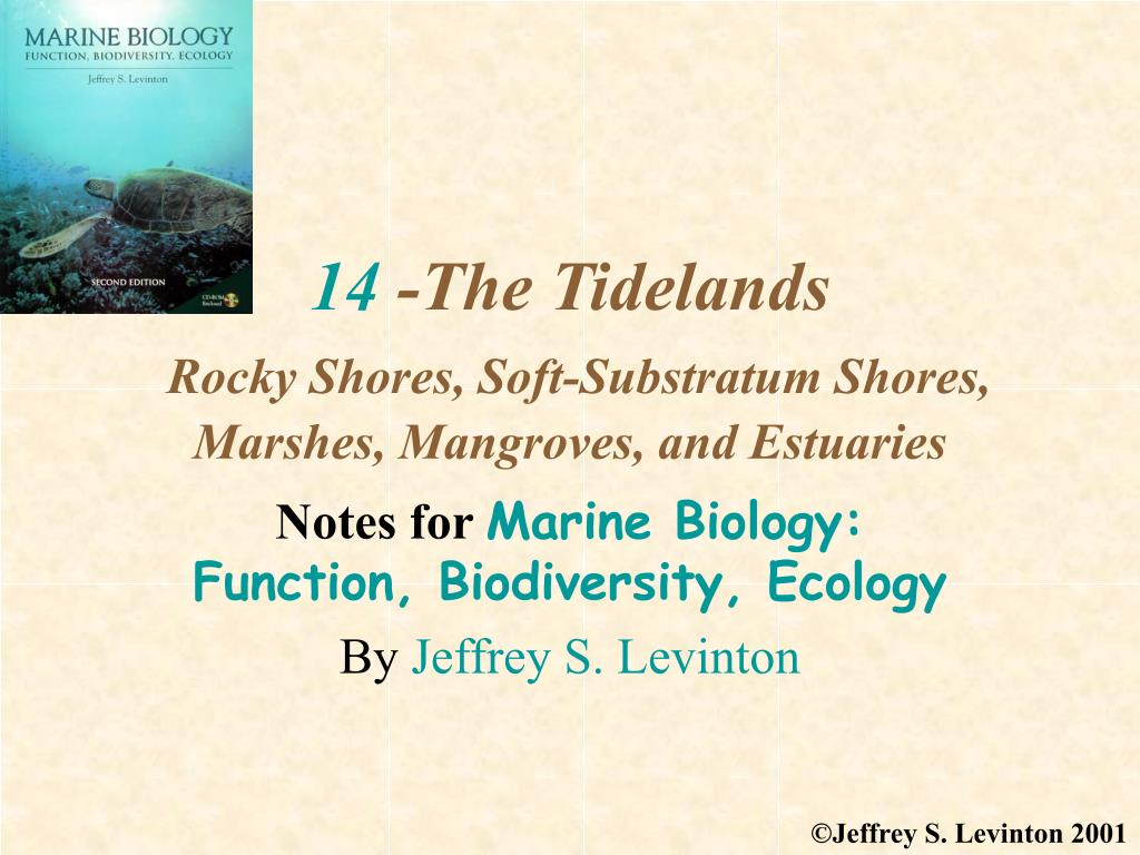 14 the tidelands rocky shores soft substratum shores marshes mangroves and estuaries l.