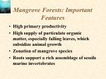 mangrove forests important features