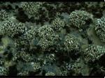23 barnacles