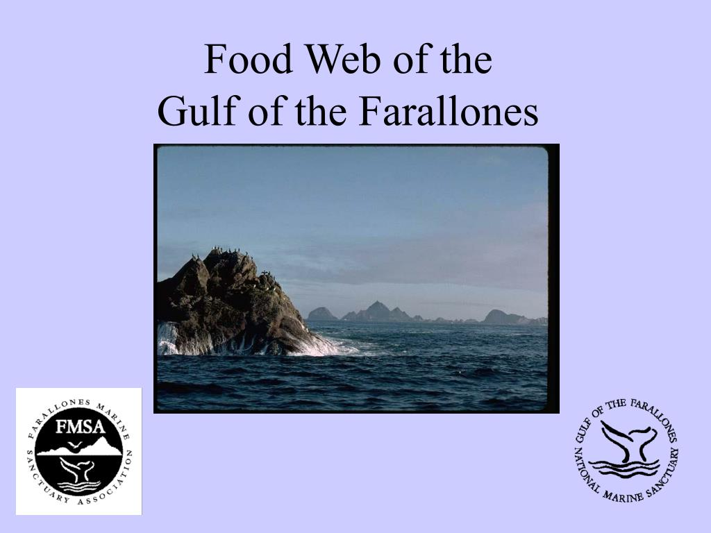 food web of the gulf of the farallones l.