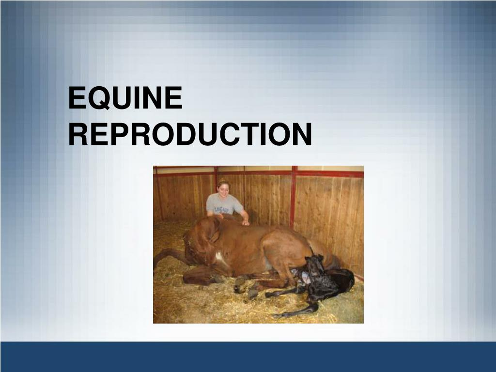 equine reproduction l.