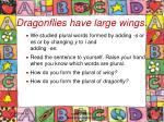 dragonflies have large wings