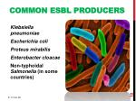 common esbl producers