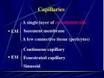 capillaries