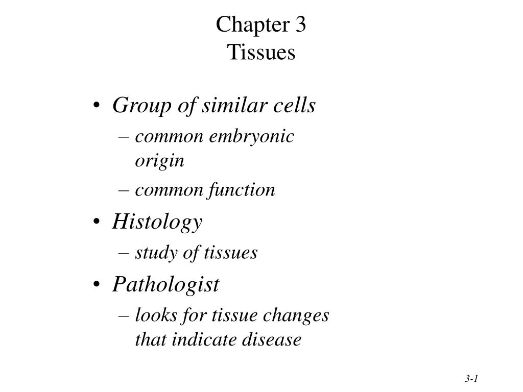 chapter 3 tissues l.
