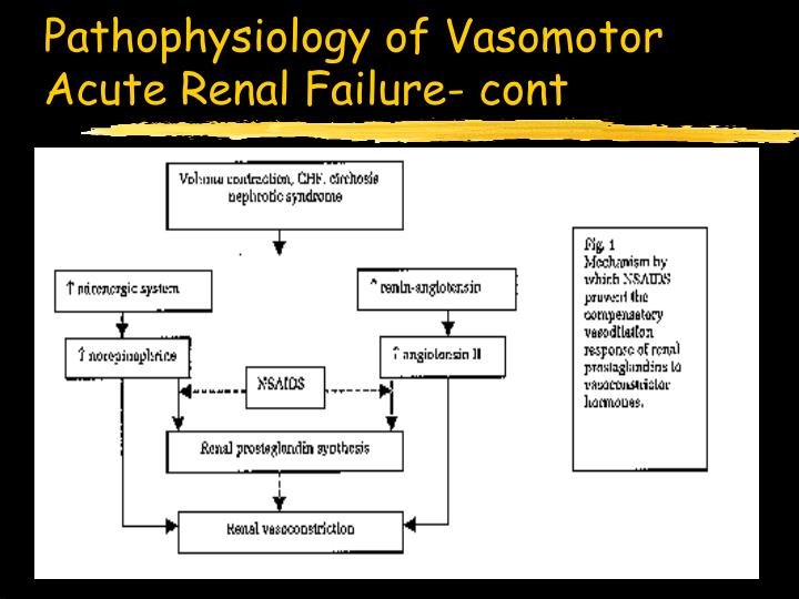 the issues associates with acute renal failure Acute renal failure (arf) is a common complication of critical illness, which is associated with high mortality and has a separate independent effect they are summarized in table 4 the adqi group reviewed the issue of end-points for trials or studies in arf and summarized the advantages and.