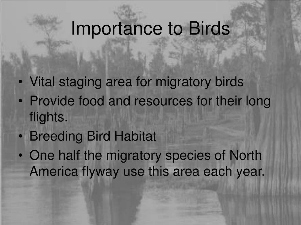 Importance to Birds