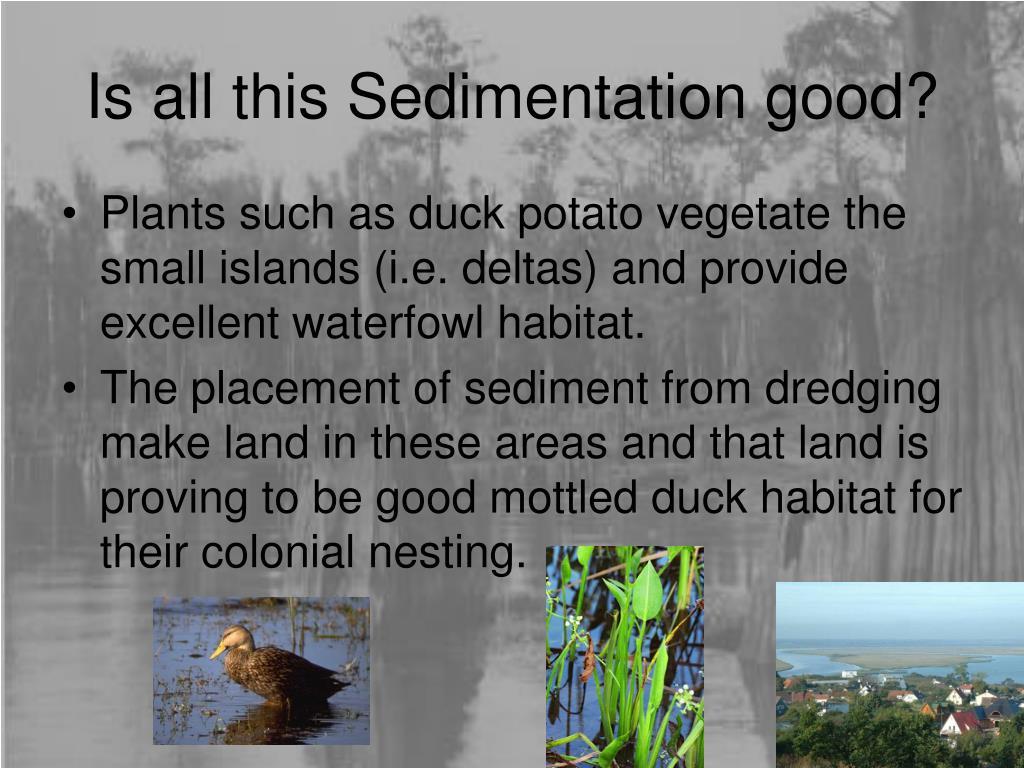 Is all this Sedimentation good?