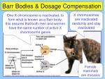 barr bodies dosage compensation