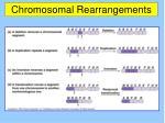 chromosomal rearrangements