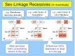 sex linkage recessives in mammals