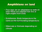 amphibians on land