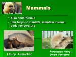 mammals60