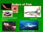 orders of fish