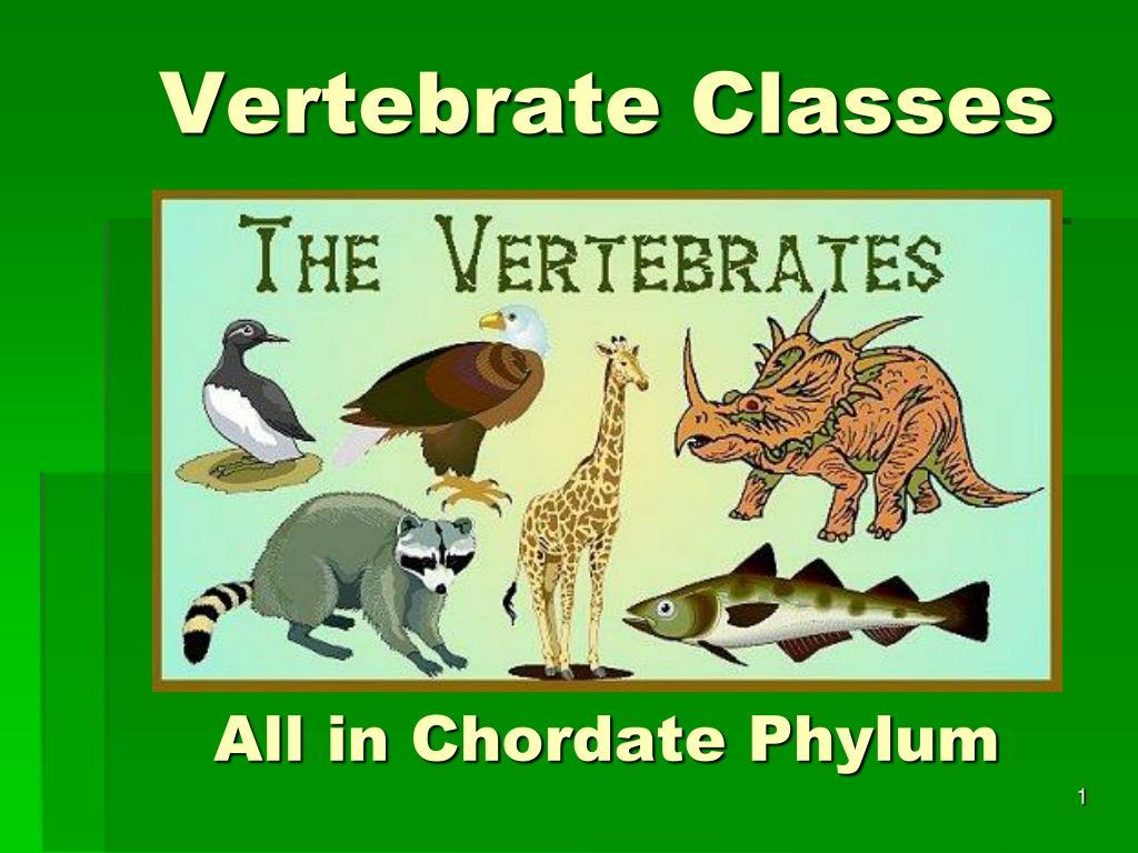 vertebrate classes all in chordate phylum l.