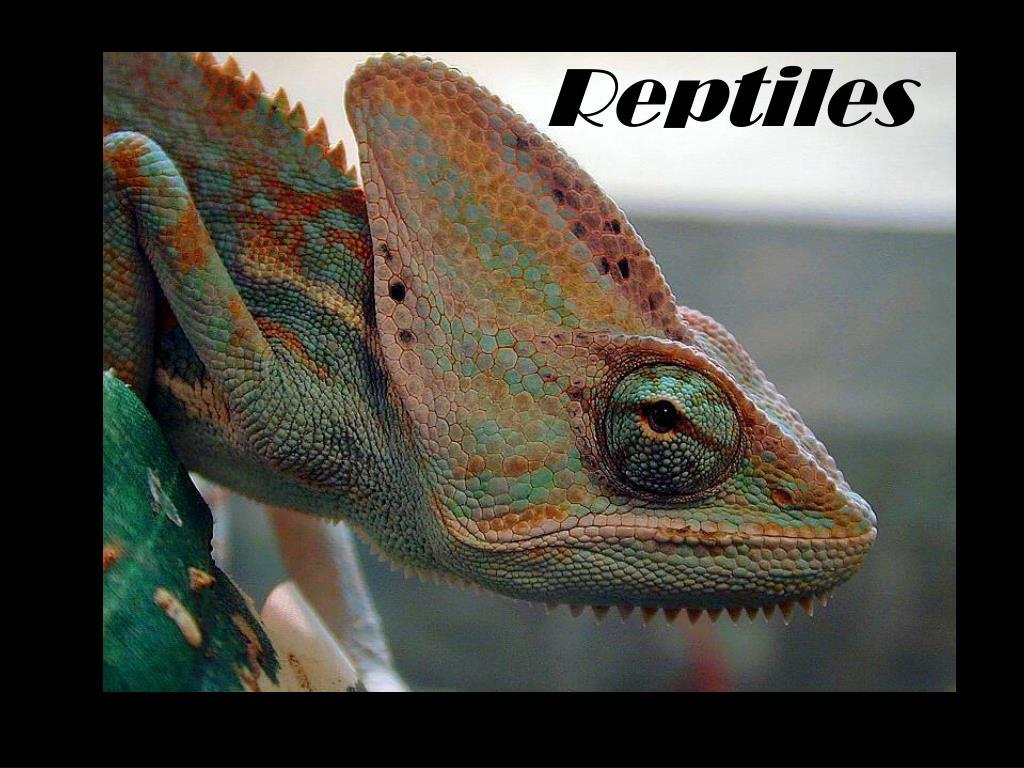 reptiles l.
