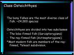 class osteichthyes3