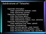 subdivisions of teleostei