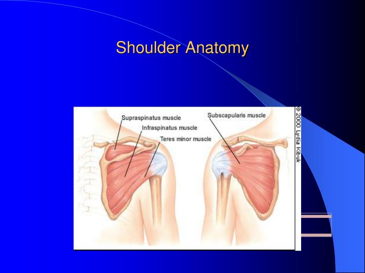 PPT - Shoulder Anatomy and a preface on the Shoulder Arthroscopy ...