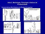 aula 3 morfologia fisiologia e ndices de produtividade19