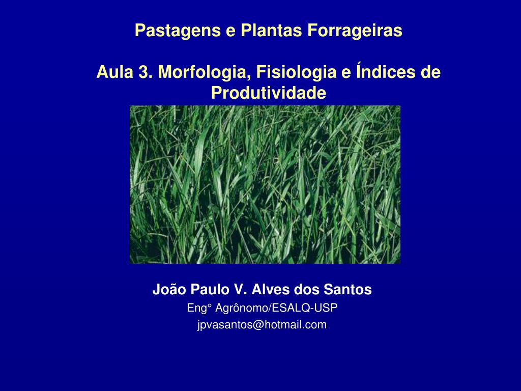 pastagens e plantas forrageiras aula 3 morfologia fisiologia e ndices de produtividade l.