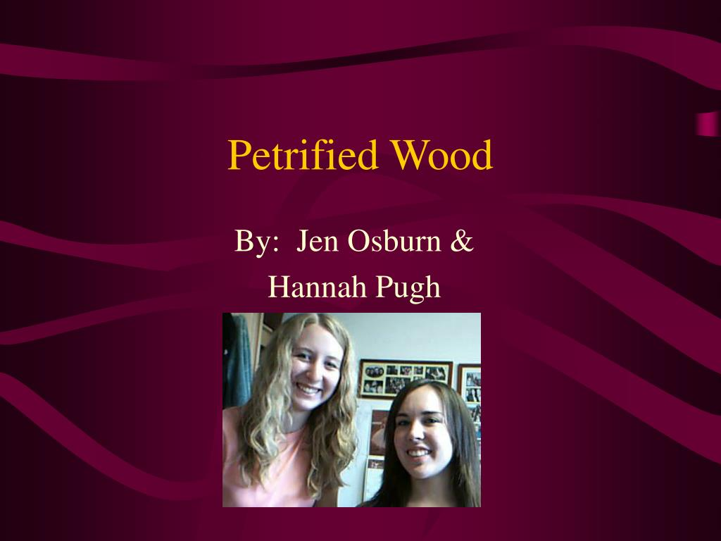 petrified wood l.