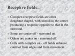 receptive fields1