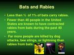 bats and rabies