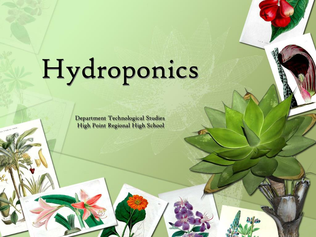 hydroponics department technological studies high point regional high school l.