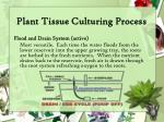 plant tissue culturing process17