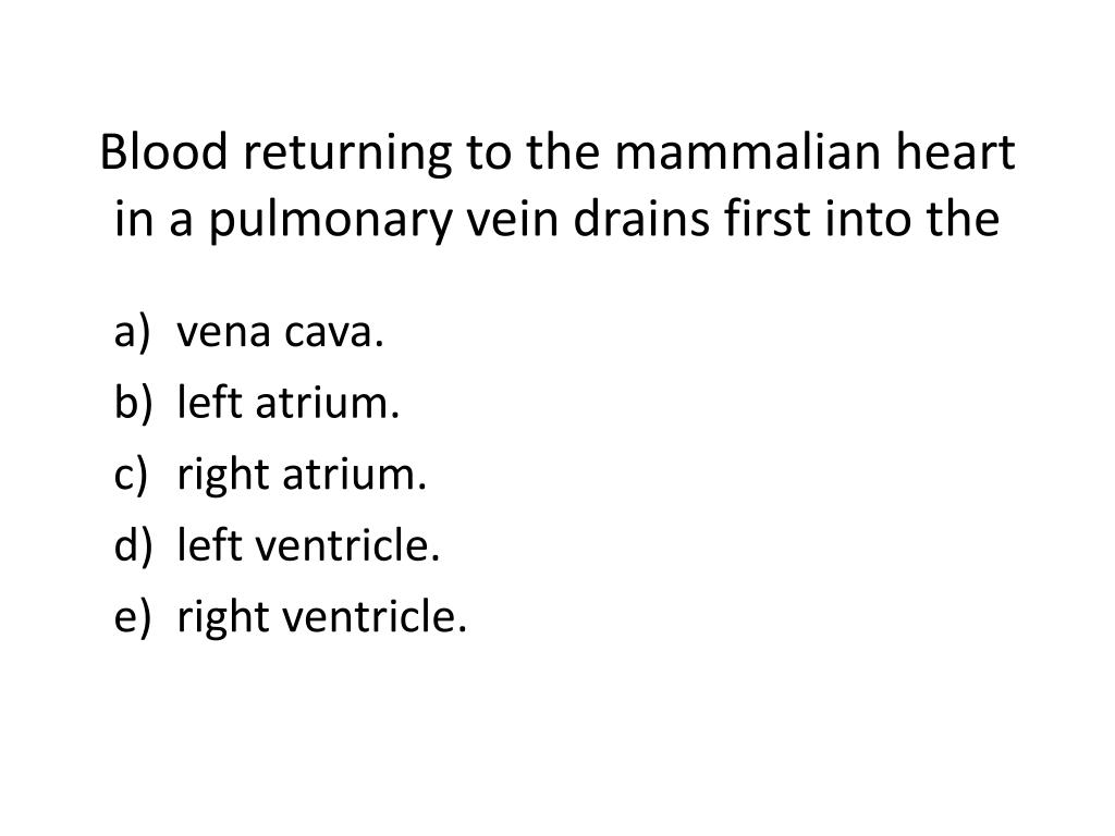 blood returning to the mammalian heart in a pulmonary vein drains first into the l.