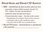 blood brain and blood csf barriers