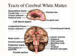 tracts of cerebral white matter