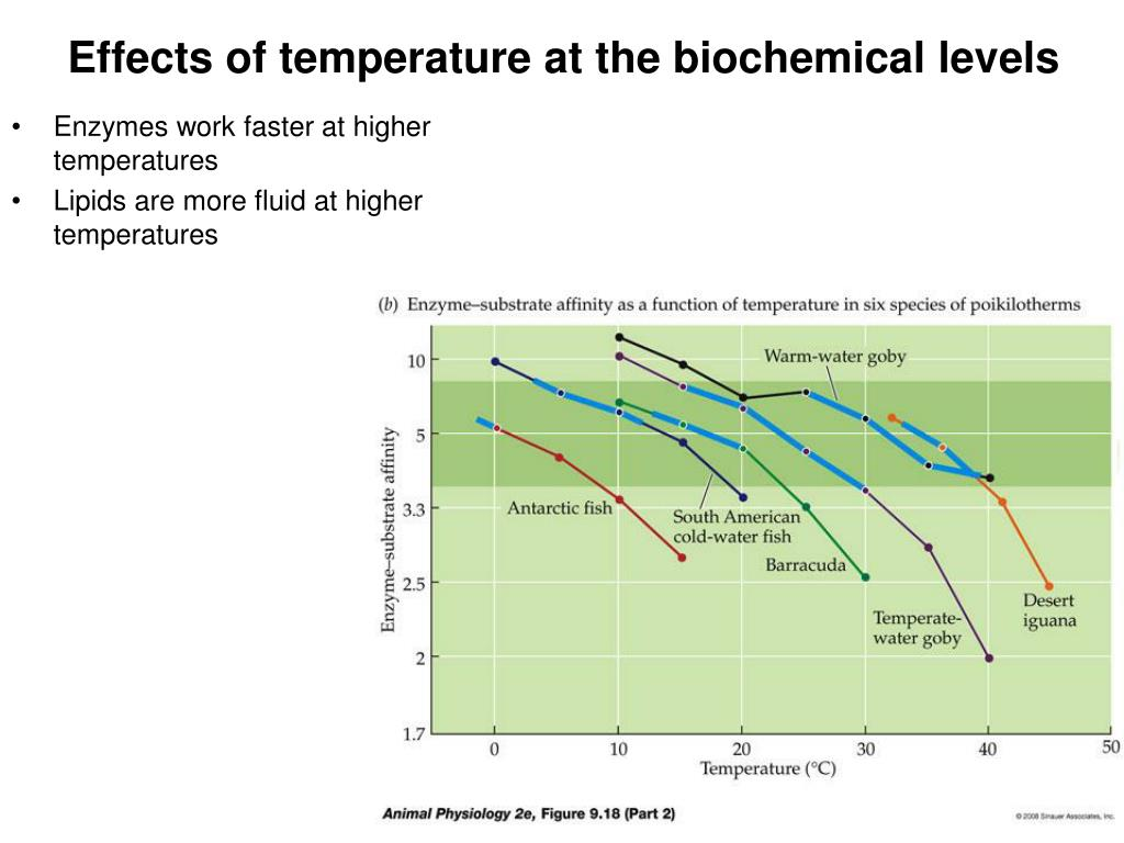 biochemistry effect of temp on