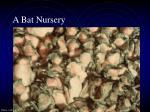 a bat nursery