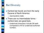 bat diversity