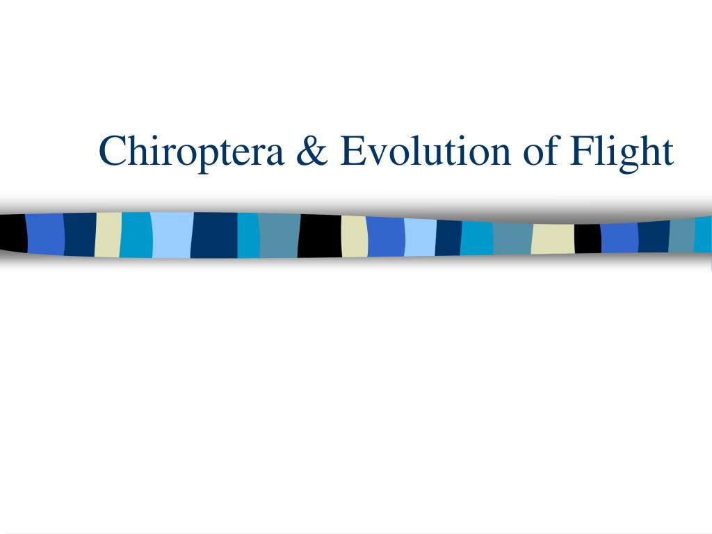 chiroptera evolution of flight l.