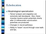 echolocation29