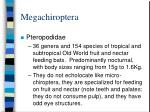 megachiroptera