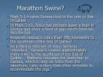 marathon swine