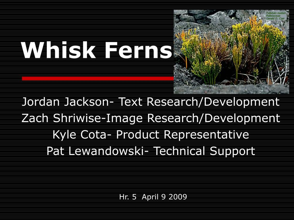whisk ferns l.