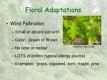 floral adaptations