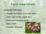 floral adaptations6