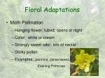 floral adaptations7