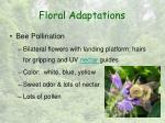 floral adaptations8