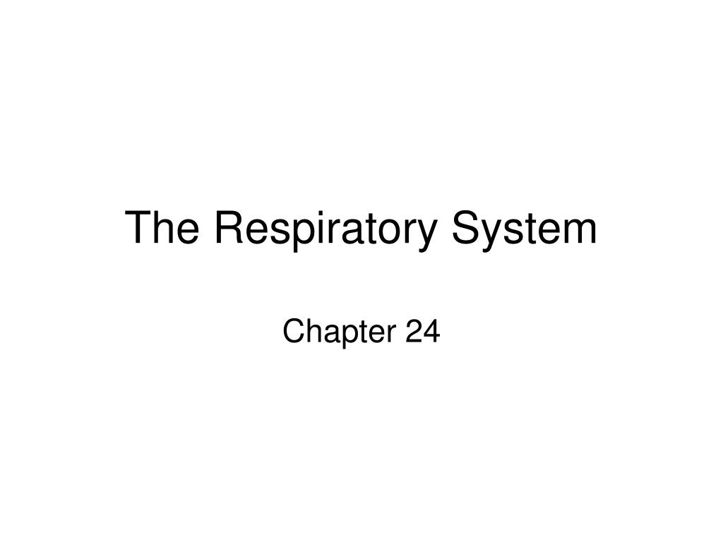 the respiratory system l.
