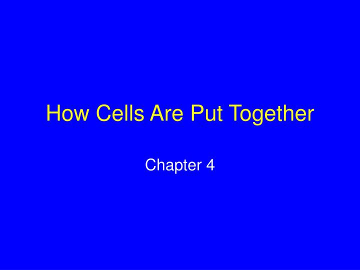 how cells are put together n.