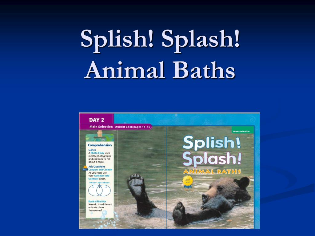splish splash animal baths l.
