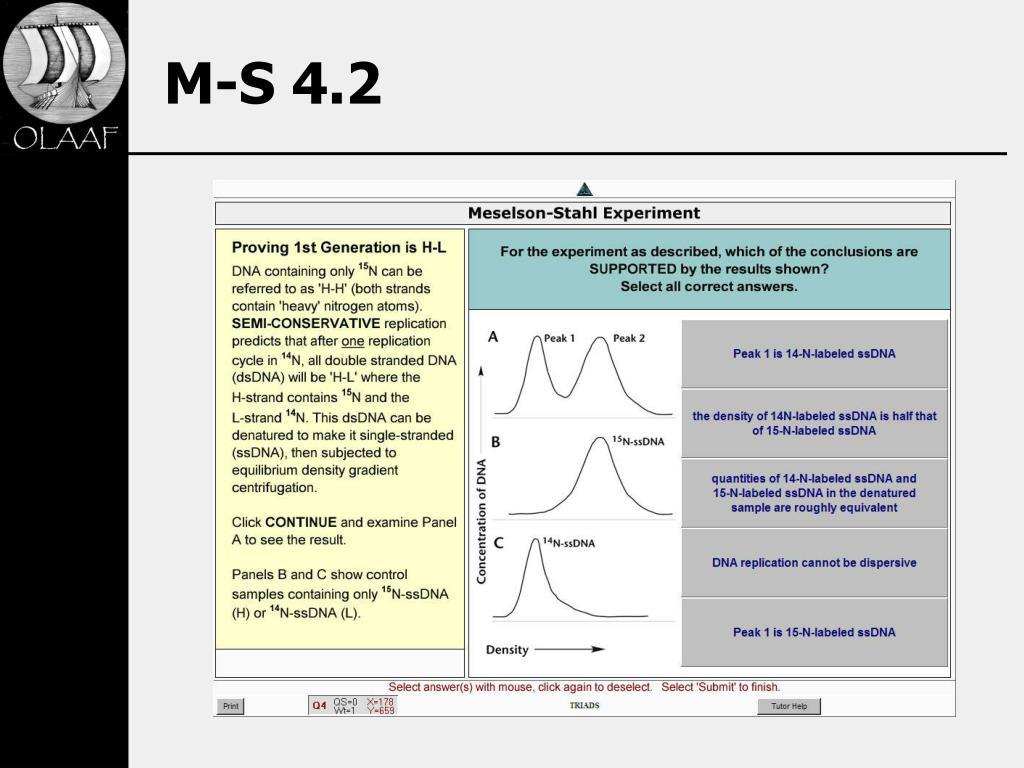 M-S 4.2